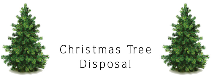 Belterra Community Association Announcements Christmas Tree Disposal
